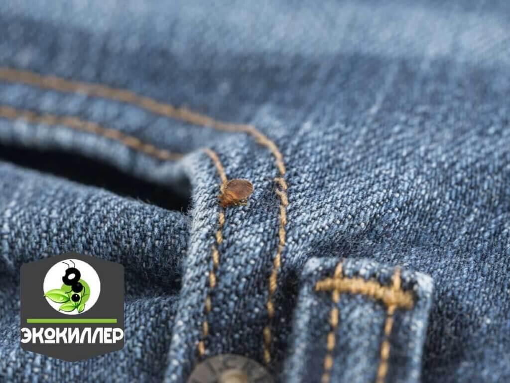 клоп на джинсах